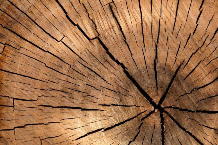 De beste houtsoorten voor buiten